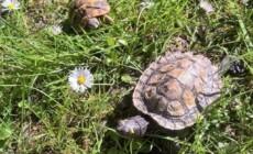 Żółw w języku i kulturze Polski