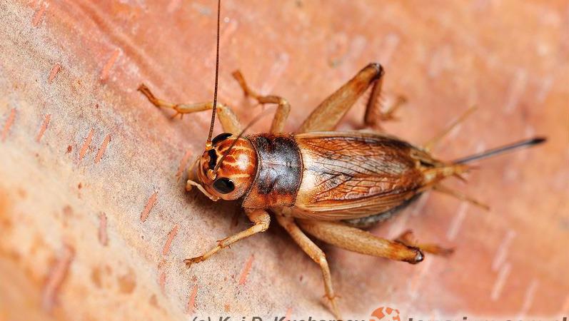 Żywienie zwierząt owadożernych a składniki odżywcze w pokarmie