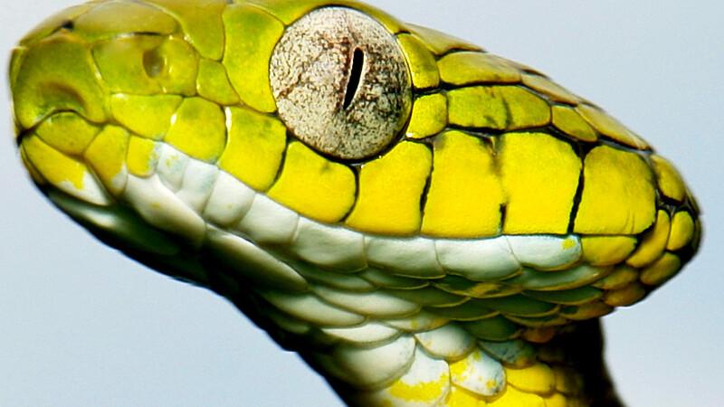 Zmysły węży