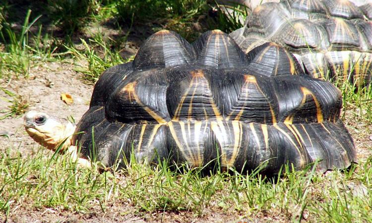 Piramidy u żółwi – co jest przyczyną ich powstawania?