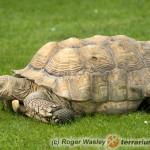 18 niezbędnych rad dotyczących zimowania żółwi