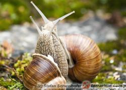 Mollusca – mięczaki