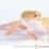 Eublepharis macularius – gekon (eublefar) lamparci*