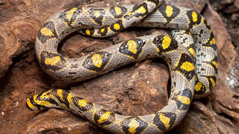 Wymioty u węży – przyczyny, zapobieganie, leczenie