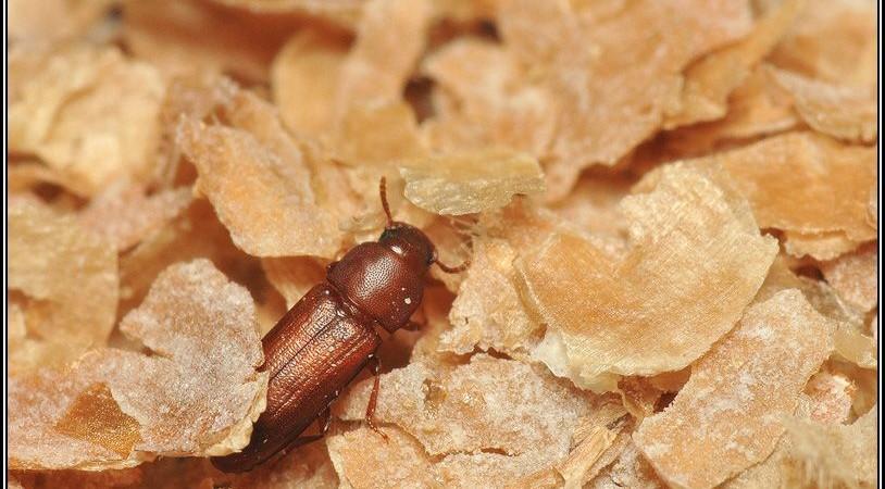 Mechanizmy umożliwiające koegzystencję konkurentów wśród owadów w środowisku