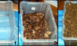 Podłoże oraz żywienie w hodowli chrząszczy egzotycznych