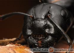 Rola wzroku w orientacji przestrzennej u mrówek