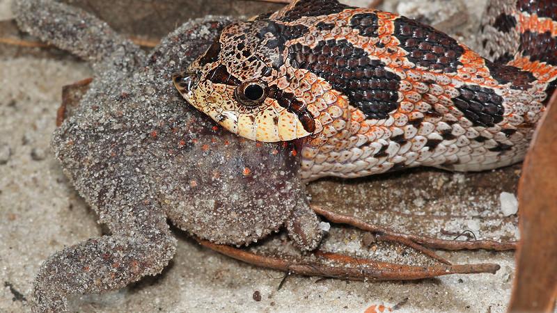 Etyczne aspekty karmienia węży żywym pokarmem