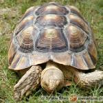 Bezpieczniejsze zimowanie twojego żółwia