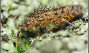 Szkodniki roślin owadożernych