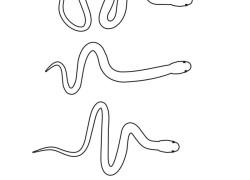 Jak poruszają się węże?