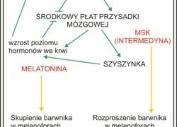Wpływ hormonów na ubarwienie płazów i rodzaje pigmentów