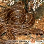 Utrzymywanie młodych węży właściwych