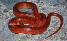 Węże – początki hodowli
