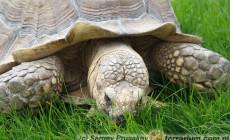Żywienie żółwi lądowych – pytania