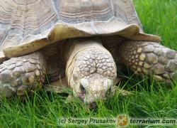 Żywienie żółwi Peer Zwart