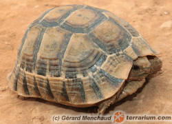 Żywienie żółwi lądowych z basenu Morza Śródziemnego