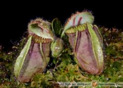 Rośliny owadożerne – pytania