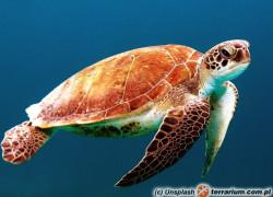 Najstarszy znany żółw morski – Desmatochelys padillai