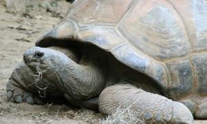 Żywienie żółwi lądowych