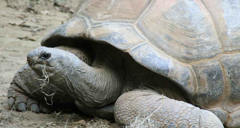 Jak duże bywają żółwie?
