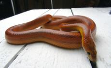 Węże – najczęściej zadawane pytania