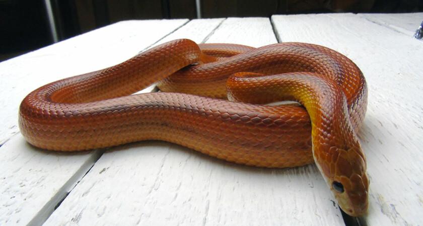 Węże – pytania