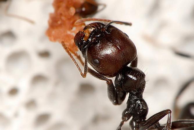 Mrówki – podstawy hodowli