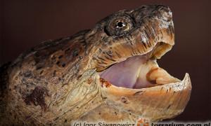 Reptilia – gady