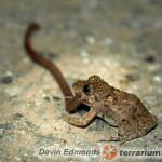 Żywienie żab
