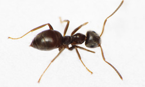 Mrówki – pytania
