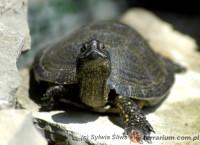 [Świat] Dzień Żółwia