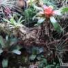 Prawidłowo urządzone terrarium dla zwierząt tropikalnych
