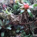 Właściwy dobór roślin do terrarium