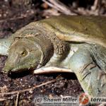 Żółwie wodne – podstawy hodowli