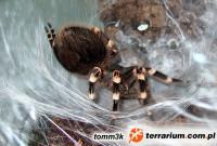 [Świętochłowice] - Giełda Terrarystyczna - Animals Live