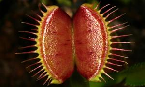 Rośliny owadożerne – podstawy hodowli