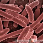 Infekcje bakteryjne u węży