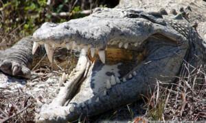 Zwierzęta niebezpieczne i jadowite – Czy można je hodować?