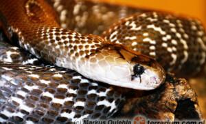 Jady węży
