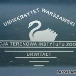 Preparowanie pasożytów z organizmów żab moczarowych (Rana arvalis)