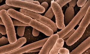 Infekcje bakteryjne u żółwi
