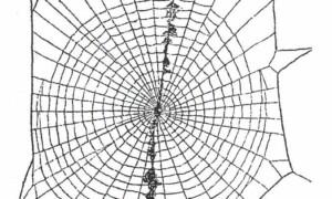 Po co pająkom pajęczyna?
