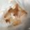 Ceratogyrus darlingi – raport rozmnożeniowy