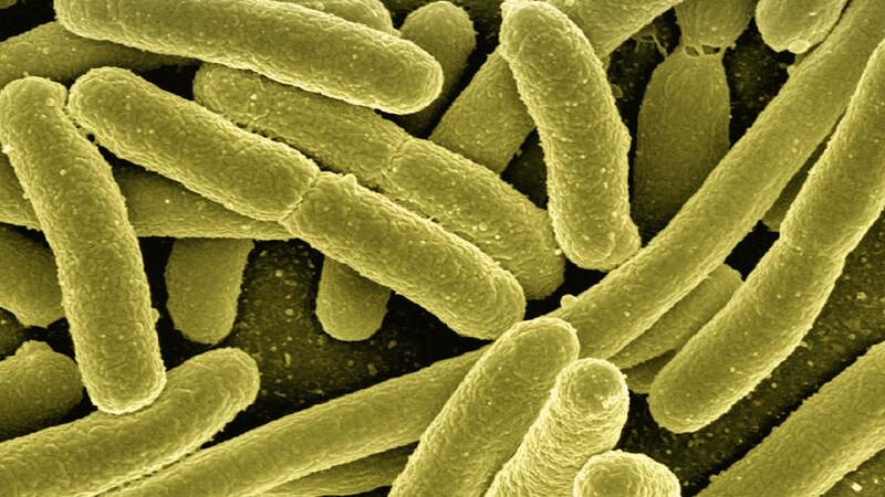 Infekcje bakteryjne u jaszczurek
