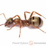Gdzie szukać mrówek?