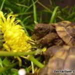 Pierwsze terrarium dla małych żółwi lądowych