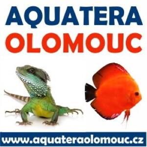 ✅ [Czechy - Ołomuniec] Aquatera Olomouc