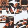 Brachypelma smithi vs hamorii