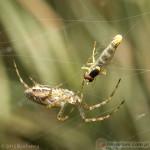 Arachnida – pajęczaki
